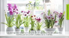 Conoce las razones por las que tener plantas en el interior de tu casa es bueno. #Thermohomes
