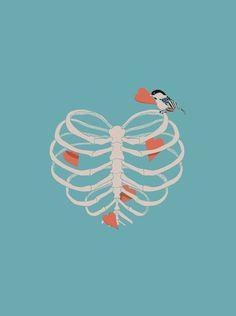 heart, bird, anatomical