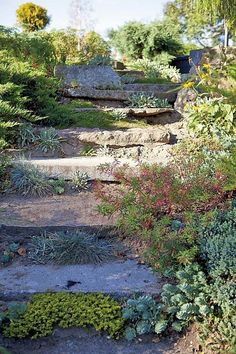 outdoor stairs lake nature country