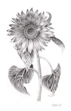 Sunflower Tattoo--I actually like the black and white more than YELLOW on skin. LOVE IT