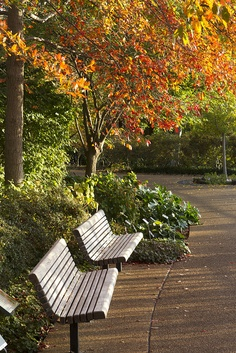 Spot to sit on a crisp autumn day near the Kemper Center. Photo by Kevin Kersting.
