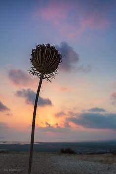 """500px / Photo """"Flower At Sunset"""" by Roy Rozanski"""