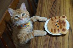 とらぱん - かご猫 Blog