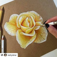 #coloredpencil #flower #rose #drawing by @kellylahar #art urkina.com