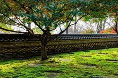 http://nsp-jp.com/gifu/  大智寺-瓦土塀と無相の庭 Fence which made of roof tiles and soil in the Daichiji-Temple in Gifu city Gifu Prefecture Japan  #大智寺 #岐阜市 #岐阜県  #故郷 #故郷巡礼 #聖地巡礼 #岐阜命名450年 #写真好きな人と繋がりたい #gifuphoto #travel #traveling #journey #tourism #photo #sugiyamanobu #Unknownjapan #instagram #instagramjapan #JapaneseTemple #JapaneseShrine #JapaneseTradition #TravelJapan #JapanTrip #ExploreJapan #JapanAdventure #JapanHoliday #CoolJapan #WonderfulDestinations #Amazing