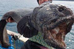 Monsterfisken fra helvede: Har du nogensinde set noget lignende? - Utroligt men sandt | www.bt.dk