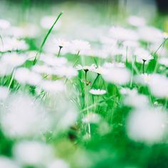 Beautiful free images for personal and commercial use. All business, food, people and technology photos are free, high-resolution, and no attribution is required. Technology Photos, Free Images, Dandelion, Stock Photos, Flowers, Plants, Negative Space, Beautiful, Thoughts