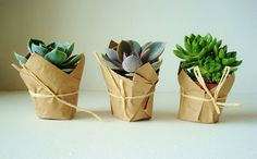 Sweet, simple, succulents