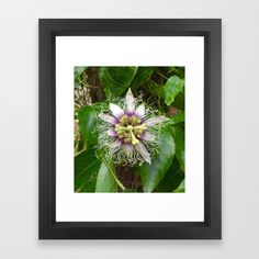 Passiflora Framed Art Print   The Ahimsa Project   www.society6.com/theahimsaproject