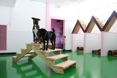 Doggie Daycare is offered 6 days/week