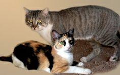 Grumpy Cat Mom and Dad #GrumpyCat