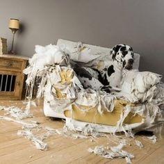 Was Hunde unter Gemütlichkeit verstehen...