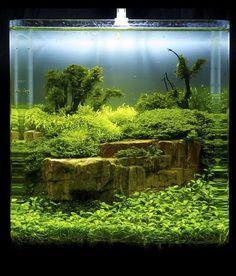 Beautiful fish tank