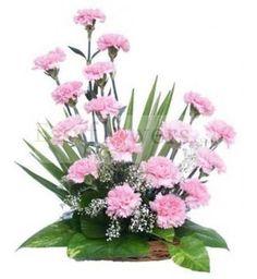 Basket arrangement of 16 Pink Carnations. #EasyFlowersKolkata