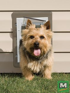 977a694417b2 Imagine a pet door installed behind a couch or in a utility room. The  PetSafe