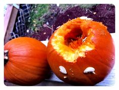 how to prevent squirrels from eating your pumpkins.