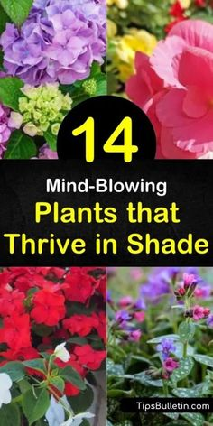 Looking to spruce up those shady areas areas with something besides hosta? Let us show you the best plants for full shade, as well as those that thrive in partial shade. From hardy evergreens to colorful coral bells, we show you what works best. Full Shade Shrubs, Partial Shade Perennials, Flowering Shade Plants, Shade Garden Plants, Blooming Plants, Flowers Perennials, Shaded Garden, Evergreens For Shade, Garden Shrubs