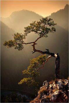 natural bonsai...