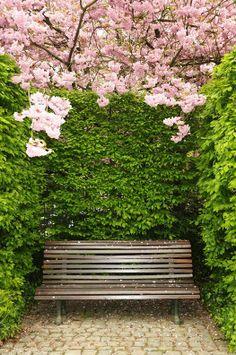 Sunil bhatt via Beautiful Pictures Outdoor Gardens, Indoor Outdoor, Outdoor Decor, Outdoor Spaces, Great Pictures, Beautiful Pictures, Landscape Design, Garden Design, Timeline Design