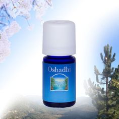 Shop online or phone (+44) (0) 1223 242 242 for Japanese Cedar Essential Oil, Cryptomeria japonica, a therapeutic quality aromatherapy essential oil, steam distilled using wild-crafted plants and traditional methods, from R union, obtained from the leaves of the tree.. Immediate delivery for stock items.