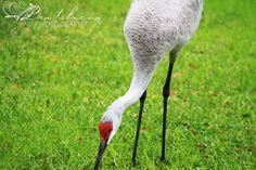 close up crane