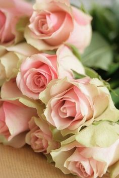 "-BLE: Blossom rose- ""If you are too much afraid of thorns you will miss the roses too because they are there together.and what is life without a rose? Love Rose, My Flower, Pretty Flowers, Pink Flowers, Pink Petals, Pretty Pastel, Romantic Roses, Beautiful Roses, Coming Up Roses"