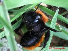 Image Photography, Insects, Bee, Animals, Honey Bees, Animales, Animaux, Bees, Animal