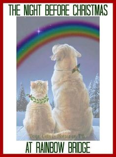 Remembering all my dogs and cats who are waiting for me at the Rainbow Bridge