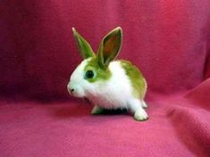 How to Make Homemade Toys for Your Pet Rabbit