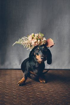 Dachshund with floral crown...