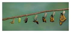 """The ancient Greek word for Soul was """"Psyche""""...the same as for Butterfly"""