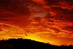 Sky with birds.