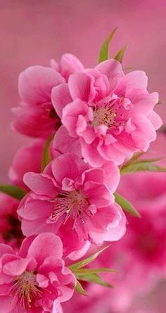 Pretty pink...