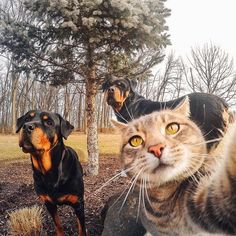 gopro : Hold on let me take this selfie first. We're going crazy over Tag a friend (or a favorite pet's IG handle) and you both have a chance to win a mount hat! Funny Cat Memes, Funny Cats, Funny Animals, Cute Animals, Selfies, Cat Selfie, National Pet Day, Raining Cats And Dogs, Funny Cat Pictures