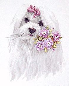 Sweet graphic of a Maltese