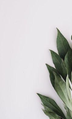 Phone Wallpaper Images, Plant Wallpaper, Framed Wallpaper, Cute Wallpaper Backgrounds, Flower Backgrounds, Photo Backgrounds, Cute Wallpapers, Aesthetic Backgrounds, Aesthetic Iphone Wallpaper