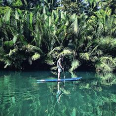 Stand up paddling in Loboc River, Bohol Island 🇵🇭😍♥️ Bohol, Palawan, Stuff To Do, Things To Do, Siargao Island, Whale Watching Tours, What To Do Today, Top Destinations, Cebu