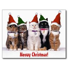 Cats - Cats - Animals - Postcards - Christmas Wallpapers, Free ClipArt for Xmas, Icon's, Web Element, Victorian Christmas Photos and Vintage Santa Claus pictures Christmas Animals, Christmas Cats, Christmas Humor, Merry Christmas, Christmas Cartoons, Christmas Wishes, Christmas Greetings, Christmas Time, Christmas Movies