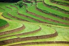 vietnam photos - Google Search
