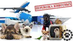 Перевозка домашних животных - Animals Travel - международная перевозка животных #перевозкаживотных #кошки #собаки🐶🐱🐹