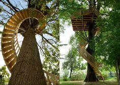 Escalier accès à la cabane perchée dans un arbre