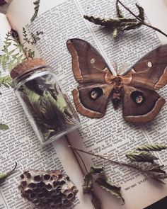 green witchcraft ofmothandmoon:Wild Harvested Blackberry leaves and branches have been traditionally used for protection of the home Green Witchcraft, Witch Aesthetic, Book Of Shadows, Goblin, Aesthetic Pictures, Inspiration, Green Fairy, Branches, Witches