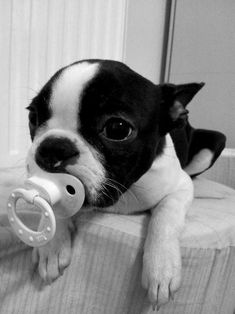 I don't know if dogs need or should use pacifiers, but this is cute.