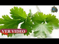 Esto  cura de un solo golpe riñones, páncreas, hígado y además… - YouTube