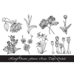 Set of hand drawn flowers vector 1254048 - by Chantall on VectorStock®