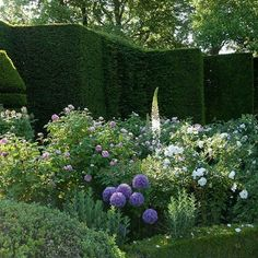 A Louis Benech garden in the Périgord, France with Eremurus, Alliums, Topiary and Roses