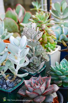 I want that ice cream looking succulent in the middle.