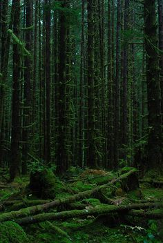 """de-preciated: Olympic National Forest by SaveWestern on Flickr. """"... The woods are lovely, dark and deep. But I have promises to keep and miles to go before I sleep..."""" R. Frost"""