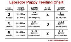 Feeding Your Labrador Puppy