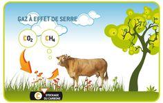 Rot des vaches, méthane et stockage de carbone